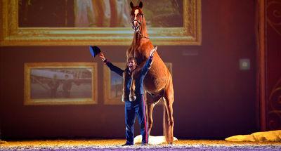 """Laurent Jahan in """"Die goldene Spur"""" 2014-2015"""