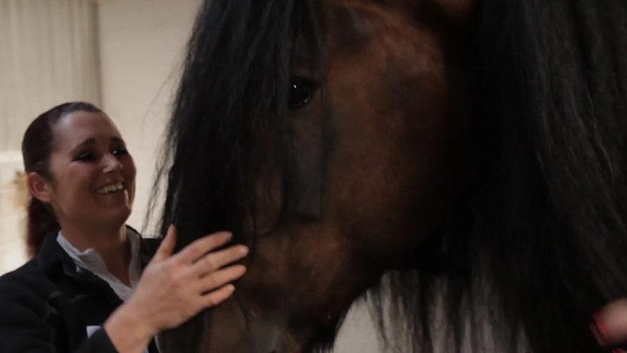 Pflege Shire Horse